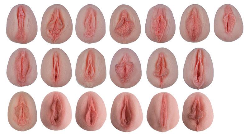 Vulva-Abdrücke mit vergleichender Anatomie   Beckenorgane